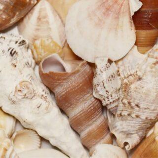 Collect seashells, not drama.   #seashells #seashell #shell #drama #collect #collection #spiral #seashellcollection #seashellcollector #seashellcollecting #collector #collecting #vitaminsea #bluetherapy #bluespace #sealovers #seashelllover