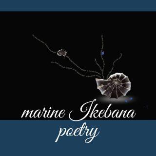 Hello weekend, please stay as long as you like.  #marineikebanapoetry #marineikebana #blacksea #mareaneagra #poetry #poem #ikigai #ikebana #seashells #art #design #photobook #nautical #beach #artprint #gallery #sea #visualpoetry #visualart #sea #art #design #photographylovers #sealovers #seashells #bluespace #brown #blue #black #elegant #beautiful